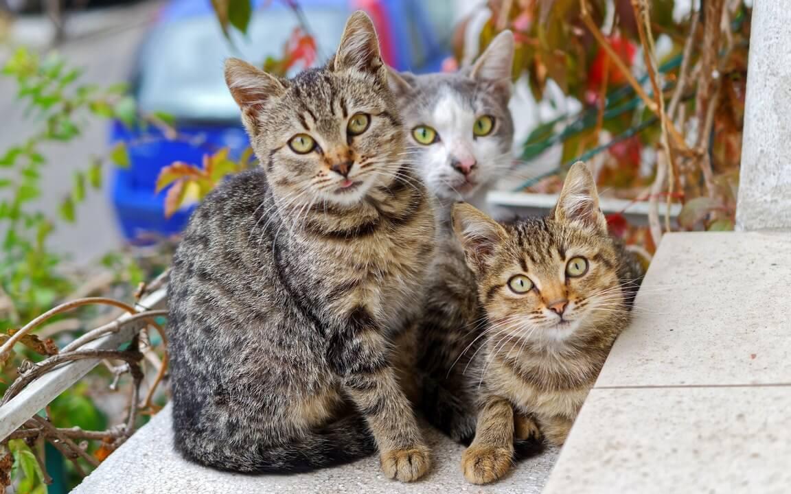 الحيوانات الأليفة,حرف للحيوانات الأليفة,حيل الحيوانات الأليفة,أطفال,قطط,تربية الهامستر,شعر الحيوان الأليف,حيل للحيوان الأليف,سرير الحيوان الأليف,القطط,حيوان أليف,حيوانات أليفة,حرف سهلة,صالون الحيوانات الأليفة,أشياء مفيدة,مربو الحيوانات الأليفة
