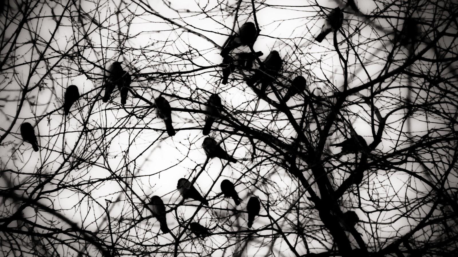 crows die in polannaruwa