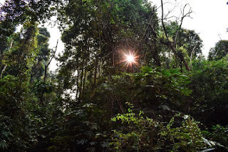 Sun coming through trees in Lawachara