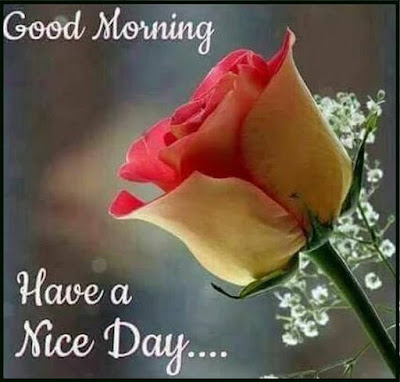 good morning baby i love you images