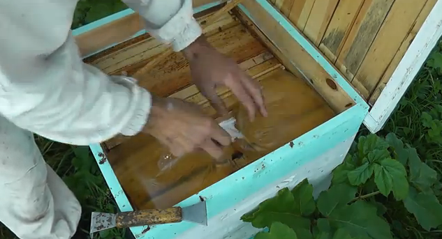 Tonic feeding of bees with the bag method!!! Video