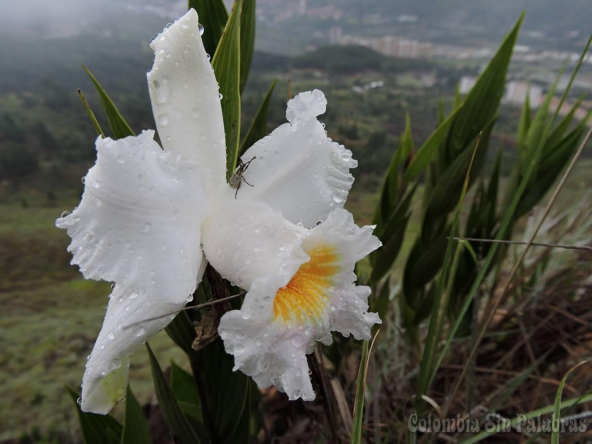 insecto sobre orquídea en el cerro quitasol