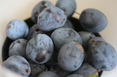 prunes ramassées au jardin bio maison