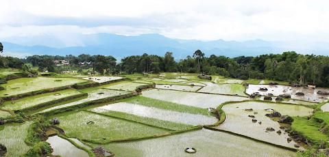 Mengenal Toraja Utara, Budaya dan Destinasi Wisatanya