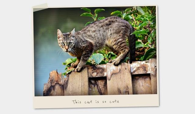 Bingkai Foto dan Gambar Polaroid dengan CSS 01