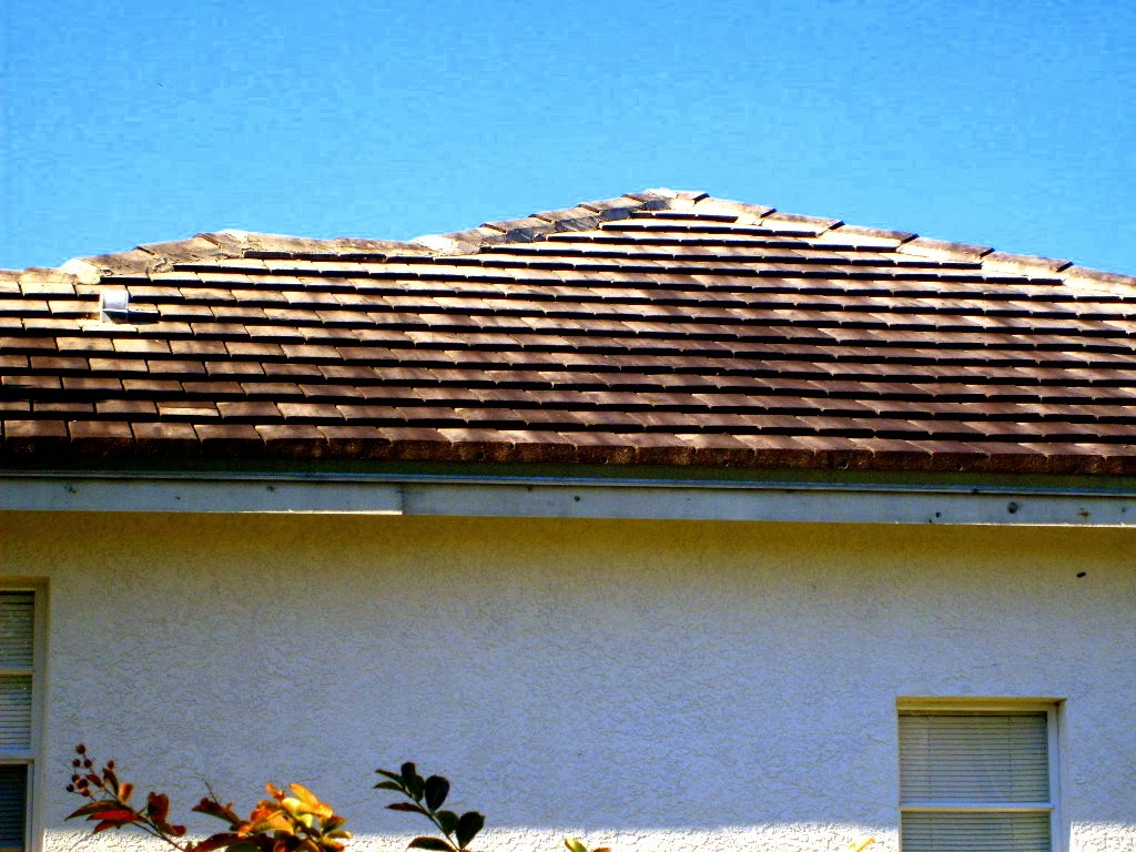 Delightful Roof Cleaning Can Prevent Staining And Help The Roof Retain Its Original  Color And Attractiveness Many Types Of Trees And Bushes That Are Commonly  Planted ...