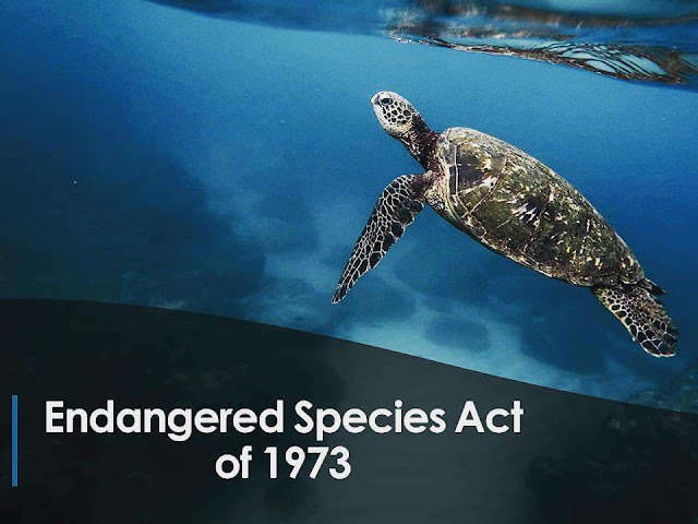 National Endangered Species Day Wishes Sweet Images