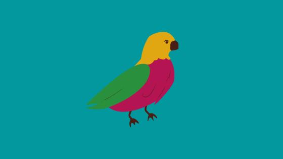 Color Bird Quiz