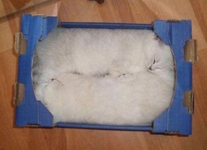 carton et chat 30