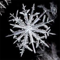 Gerçek kar tanesi kristalinin mikroskop altındaki görüntüsü