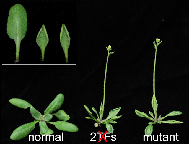 How plants turn off genes they don't need