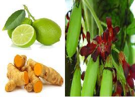 obat herbal untuk batuk berdahak