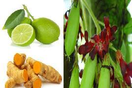 Ramuan obat herbal untuk batuk berdahak part 1