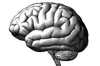 Can the Brain be a Useful Model for Artificial Intelligence?