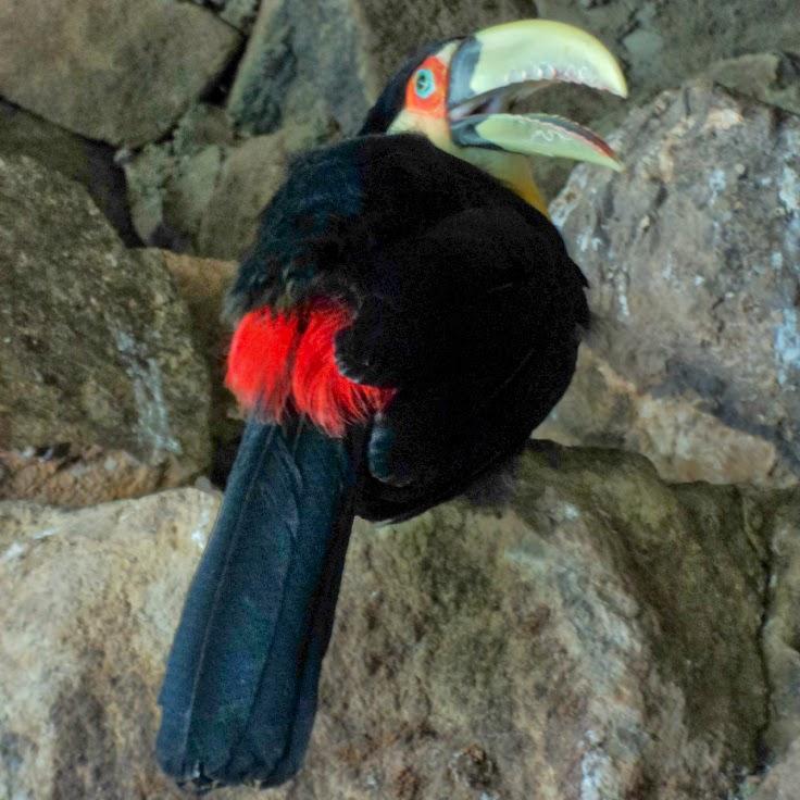 Tucano na Entrada do Zoo de Gramado