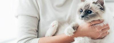 Cómo pueden ayudar las mascotas a controlar la depresión