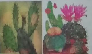 मरुस्थलीय पौधे