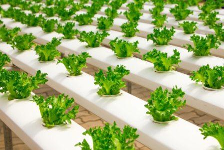 Ide Bisnis Pertanian Jamur