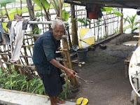 Sering Diguyur Air Sama Anaknya, Kakek Renta ini Pilih Tinggal Di Gubuk Tengah Sawah