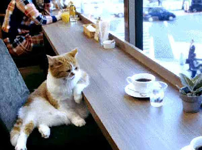 cat having a coffee
