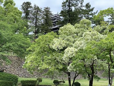 松江城天守がちらり
