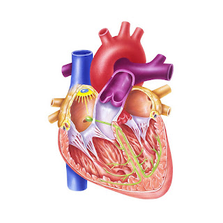 قلب بشرى