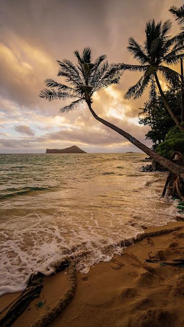 Wallpaper tropical island, beach, palm trees, sea