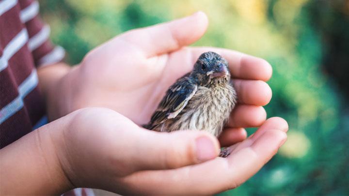 birds rescue