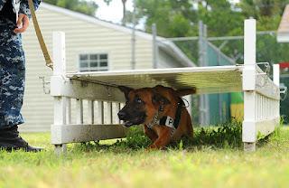 exercícios de rastejamento para cães