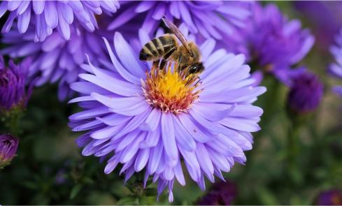 30 Kata Kata Mutiara 'Caption' Tentang Bunga