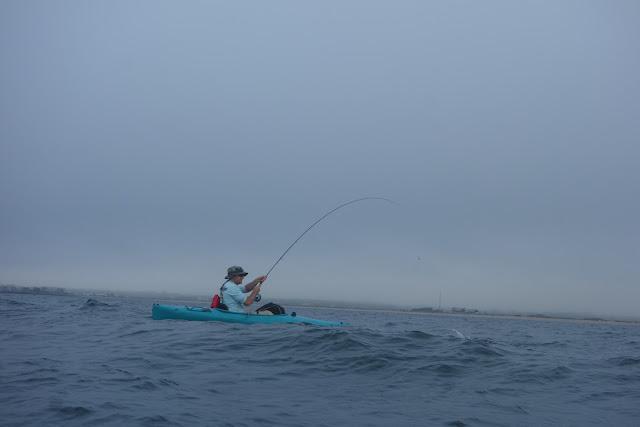 Connecticut Fly Angler: Bonito and a BIG Black Sea Bass on