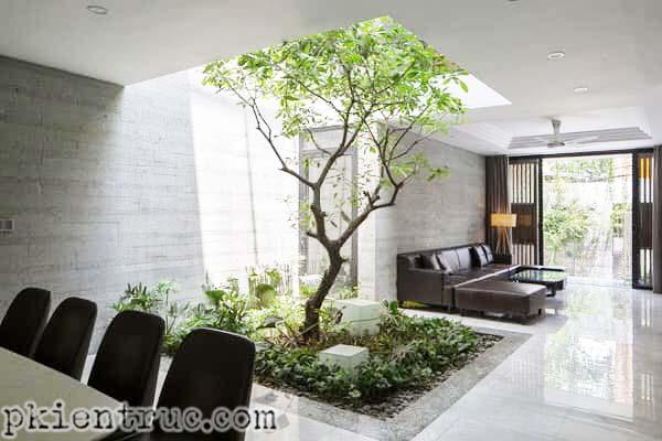 trồng cây tại ô trống giếng trời