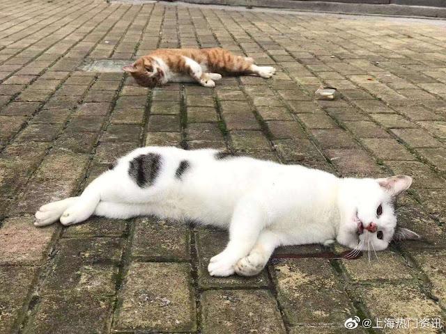 CORONA VIRUS: RAINING CATS AND DOGS IN CHINESE PLAGUE CITY