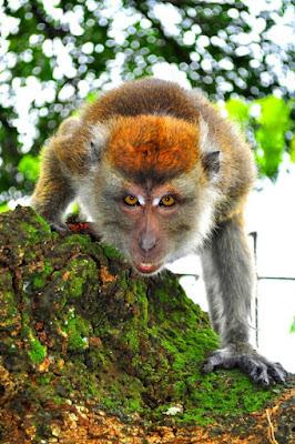 Monkey Visitor.