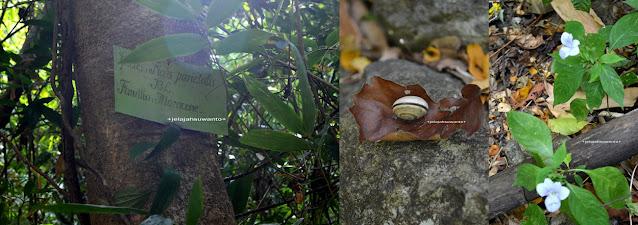 Belajar di Sumpangbita Prehistoric Park Pangkep || JelajahSuwanto