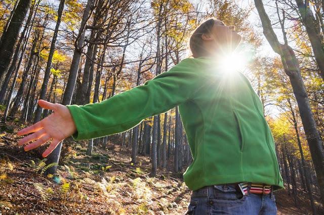 Acercarse a los bosque y a los árboles nos aporta multitud de beneficios físicos ,mentales y espirituales