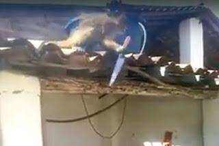 Macaco se arma com uma peixeira e é contido pela polícia