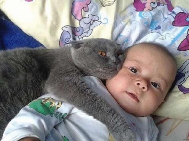 Забавные фото детей и животных!!!