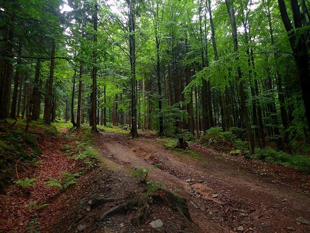 Las na Orlicy