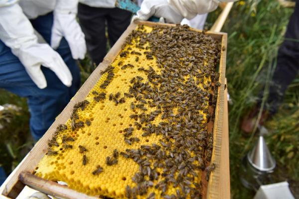 Πωλούνται στην Ναυπακτία μελίσσια μελιτοεξαγωγέας και εξοπλισμός