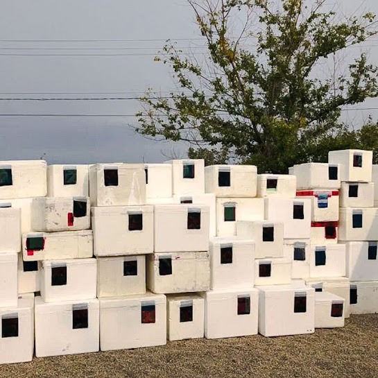 Polystyrene cooling boxes modified to be used as homes for feral cats