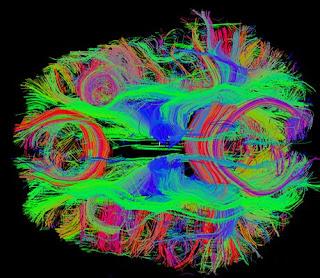 Vie neurali del cervello