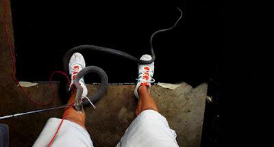 Fotógrafo é picado por cobra venenosa durante ensaio e fotografa momento exato