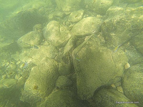 Mergulho na Baía Sueste - Fernando de Noronha