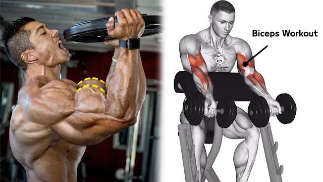 3 Exercises To Build Bigger Biceps