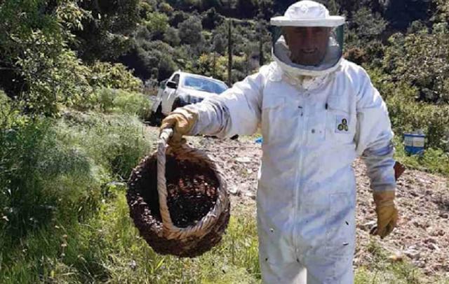 Πώς ένας συνταξιούχος λυκειάρχης, νυν μελισσοκόμος, έβαλε τον Κάτω Δρυ στον παγκόσμιο χάρτη