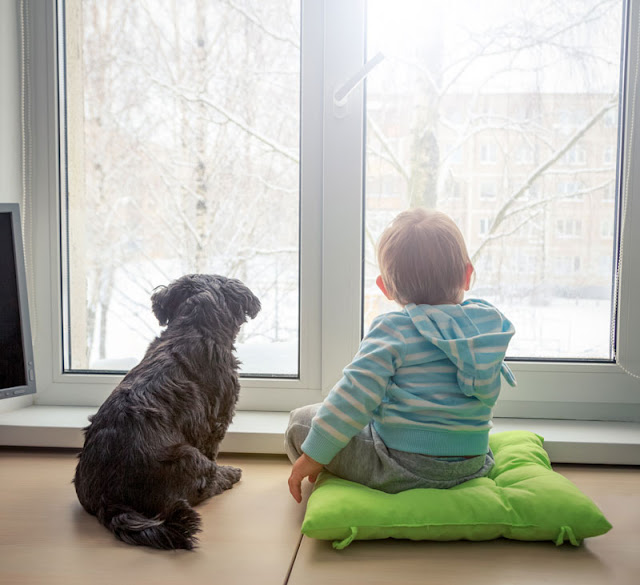 A toddler and his dog look out of the window