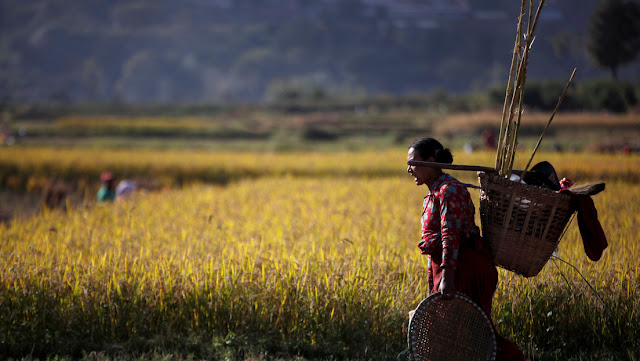 El economista jefe de la FAO alerta de que las medidas de los gobiernos contra el coronavirus podrían provocar escasez de alimentos a nivel global