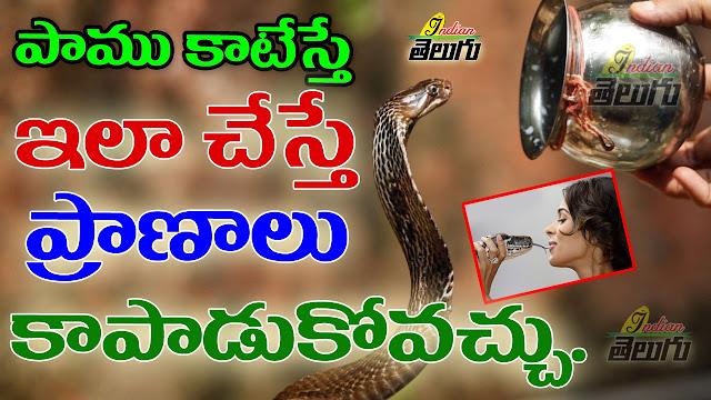 పాము కాటు:  ఏ పాములు ప్రమాదకరం?  కాటేసినపుడు ఏం చేయాలి?  |  Snake bite: Which snakes are dangerous | GRANTHANIDHI | MOHANPUBLICATIONS | bhaktipustakalu