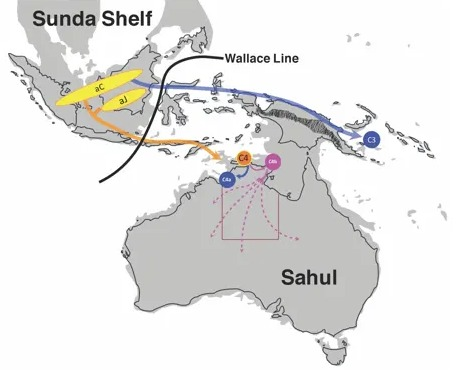 Hepatitis B virus sheds light on ancient human population movements into Australia
